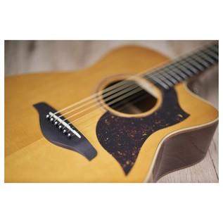 Yamaha AC5M Mahogany Electro Acoustic Guitar, Vintage Natural pickguard