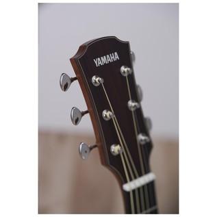 Yamaha AC5M Mahogany Electro Acoustic Guitar, Vintage Natural headstock